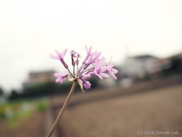 花 散歩 デトックス