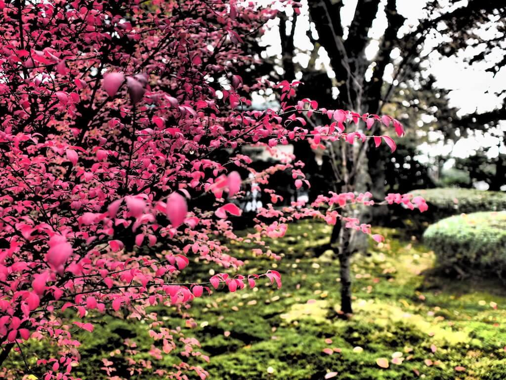 兼六園 紅葉